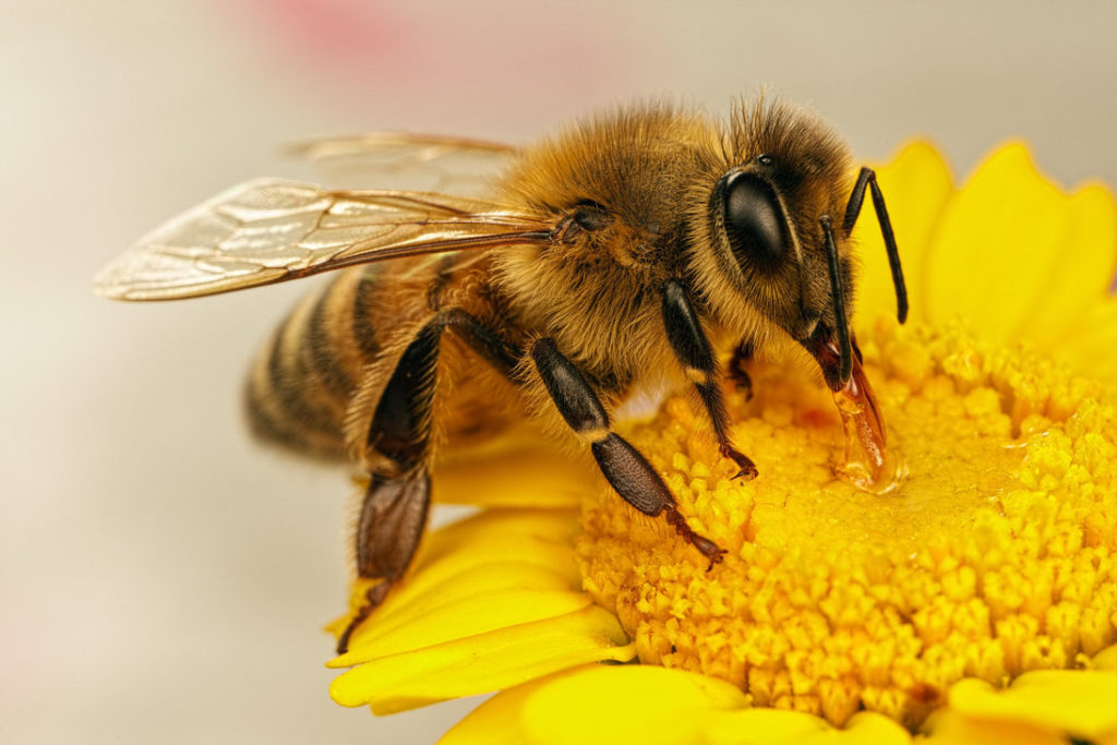 bee a force for good
